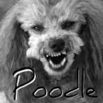 Poodle SSLv3